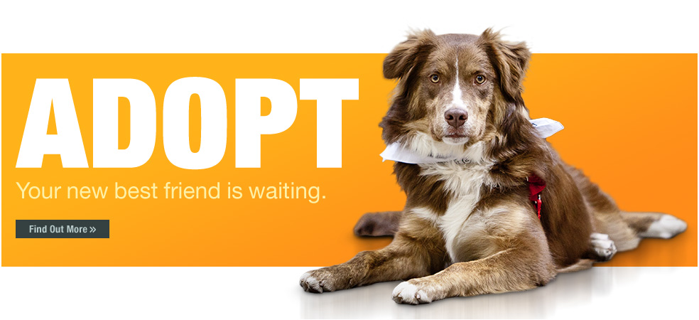 Image of: Ohio Champaign County Humane Society Home Adoption Wpsd Welcome