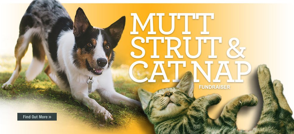 Find out more about Mutt Strut and Cat Nap event